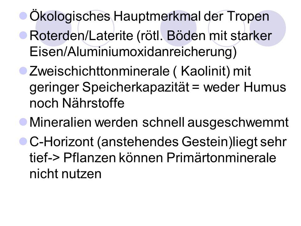 Ökologisches Hauptmerkmal der Tropen Roterden/Laterite (rötl. Böden mit starker Eisen/Aluminiumoxidanreicherung) Zweischichttonminerale ( Kaolinit) mi