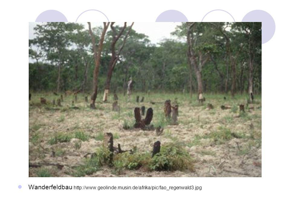 Wanderfeldbau http://www.geolinde.musin.de/afrika/pic/fao_regenwald3.jpg