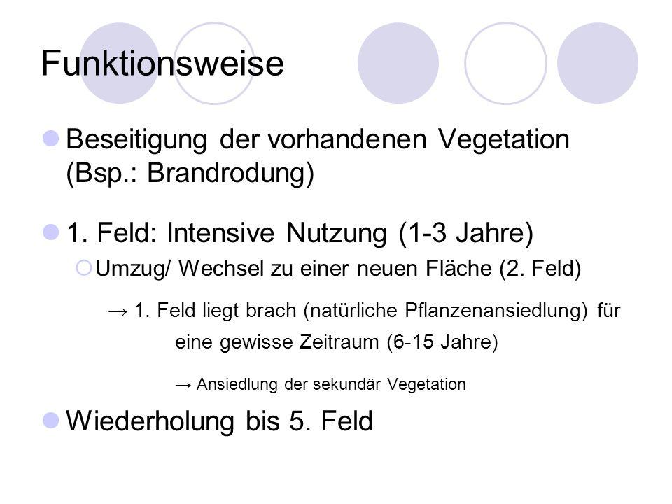 Funktionsweise Beseitigung der vorhandenen Vegetation (Bsp.: Brandrodung) 1. Feld: Intensive Nutzung (1-3 Jahre) Umzug/ Wechsel zu einer neuen Fläche