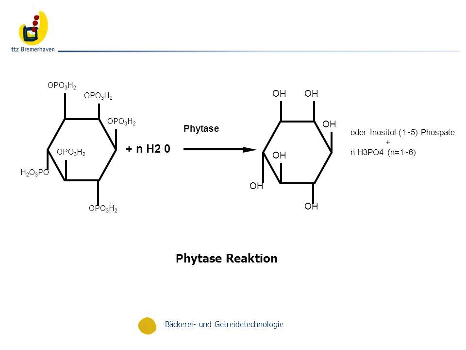 Bäckerei- und Getreidetechnologie OPO 3 H 2 H 2 O 3 PO + n H2 0 OH Phytase P hytase Reaktion oder Inositol (1~5) Phospate + n H3PO4 (n=1~6)