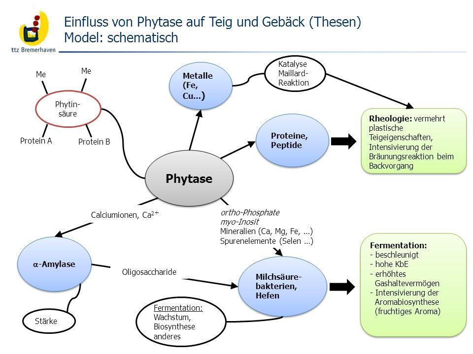 Bäckerei- und Getreidetechnologie Phytase Milchsäure- bakterien, Hefen -Amylase Fermentation: - beschleunigt - hohe KbE - erhöhtes Gashaltevermögen -