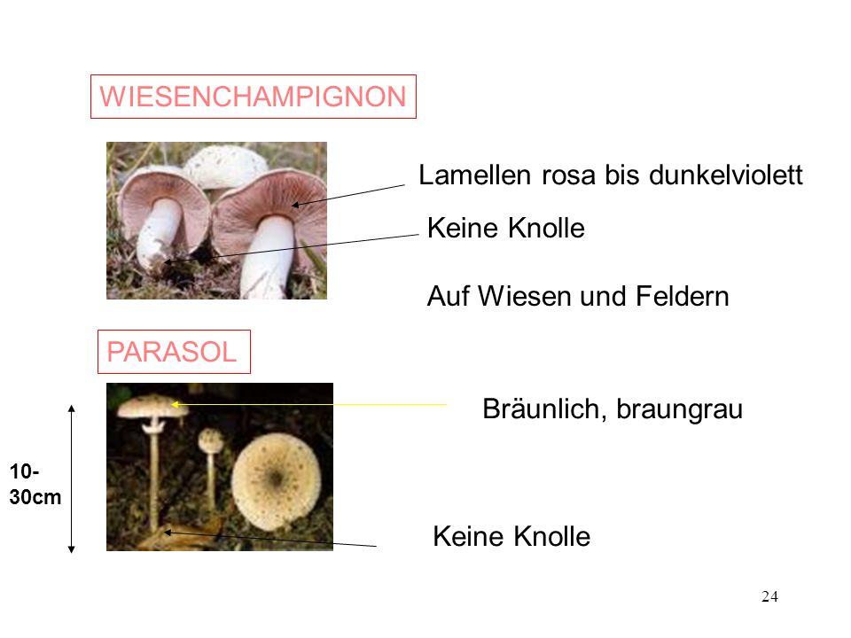 24 WIESENCHAMPIGNON Lamellen rosa bis dunkelviolett Keine Knolle Auf Wiesen und Feldern PARASOL Keine Knolle 10- 30cm Bräunlich, braungrau