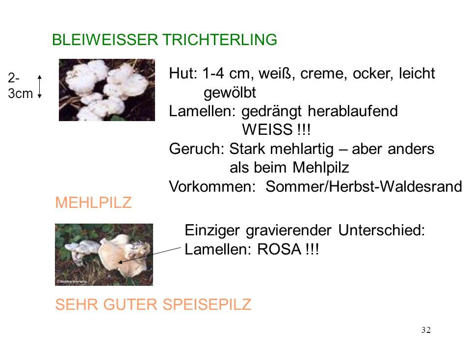 32 BLEIWEISSER TRICHTERLING Hut: 1-4 cm, weiß, creme, ocker, leicht gewölbt Lamellen: gedrängt herablaufend WEISS !!! Geruch: Stark mehlartig – aber a
