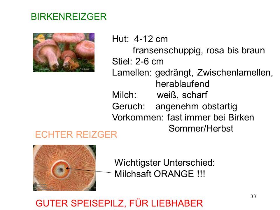 33 BIRKENREIZGER Hut: 4-12 cm fransenschuppig, rosa bis braun Stiel: 2-6 cm Lamellen: gedrängt, Zwischenlamellen, herablaufend Milch: weiß, scharf Ger