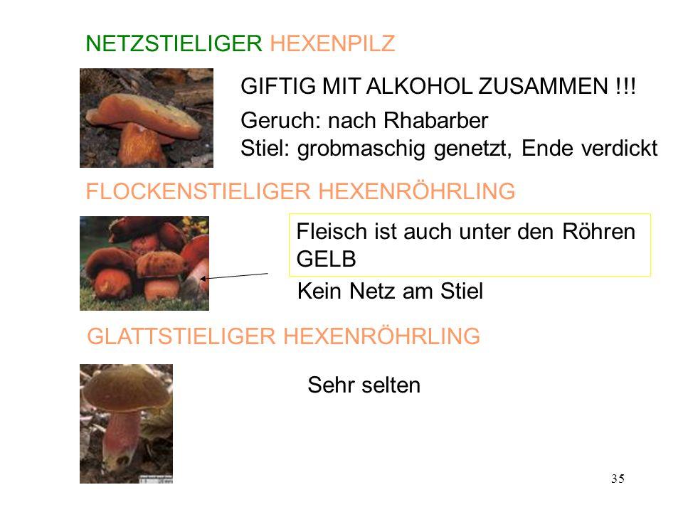 35 NETZSTIELIGER HEXENPILZ GIFTIG MIT ALKOHOL ZUSAMMEN !!! Geruch: nach Rhabarber Stiel: grobmaschig genetzt, Ende verdickt GLATTSTIELIGER HEXENRÖHRLI