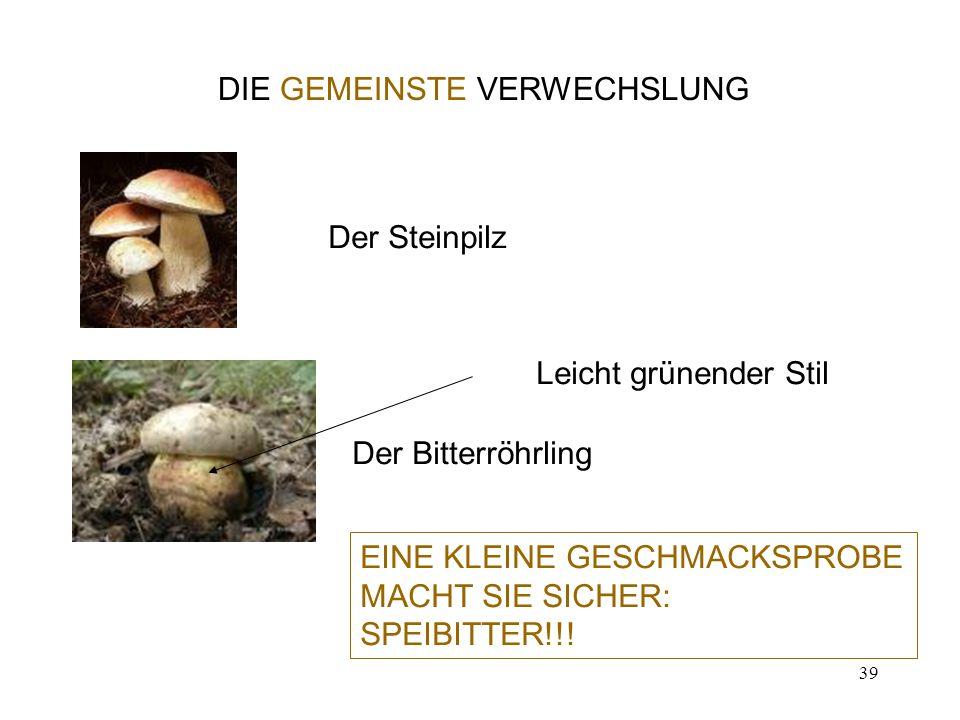 39 DIE GEMEINSTE VERWECHSLUNG Der Steinpilz Der Bitterröhrling Leicht grünender Stil EINE KLEINE GESCHMACKSPROBE MACHT SIE SICHER: SPEIBITTER!!!