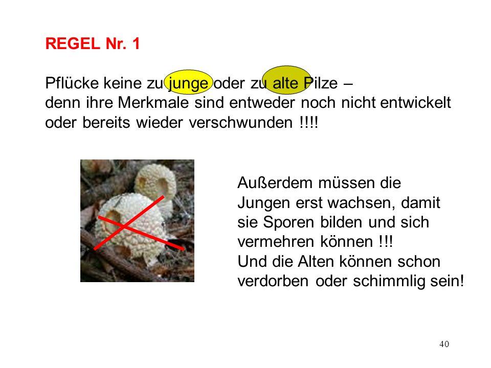 40 REGEL Nr. 1 Pflücke keine zu junge oder zu alte Pilze – denn ihre Merkmale sind entweder noch nicht entwickelt oder bereits wieder verschwunden !!!