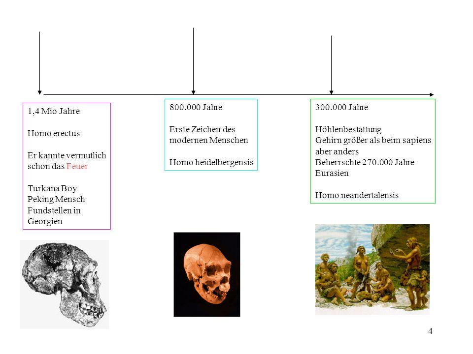 5 120.000 Jahre Homo sapiens, sapiens Ab 1350 cm³ Gehirnvolumen Erste Kunstwerke (Höhlenmalerei) Musikinstrumente Öllampen Pfeil und Bogen Haustiere 5.500 v.