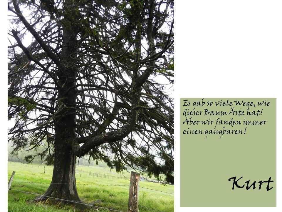 Es gab so viele Wege, wie dieser Baum Äste hat! Aber wir fanden immer einen gangbaren! Kurt