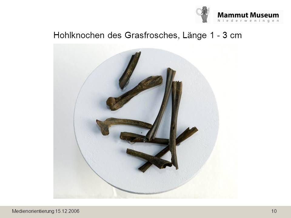 Medienorientierung 15.12.2006 10 Hohlknochen des Grasfrosches, Länge 1 - 3 cm