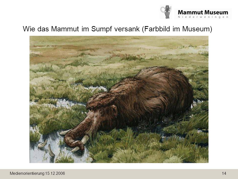Medienorientierung 15.12.2006 14 Wie das Mammut im Sumpf versank (Farbbild im Museum)