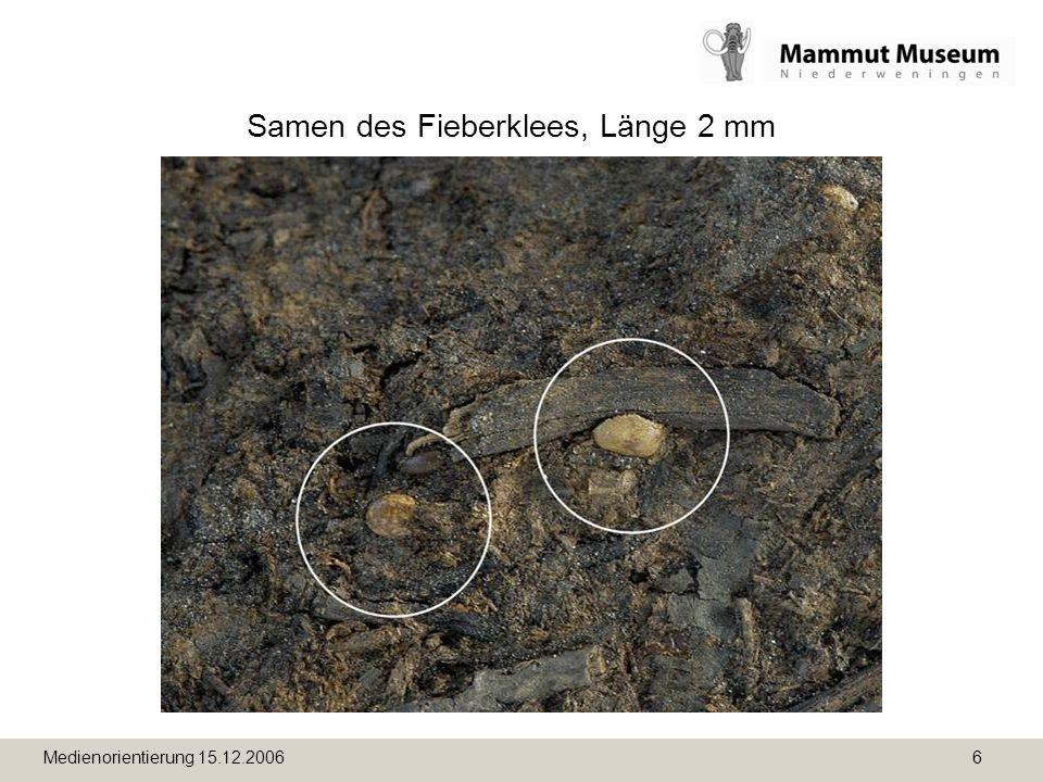 Medienorientierung 15.12.2006 6 Samen des Fieberklees, Länge 2 mm