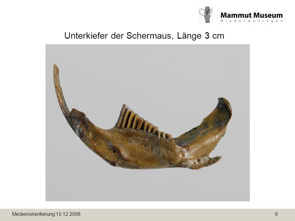 Medienorientierung 15.12.2006 9 Unterkiefer der Schermaus, Länge 3 cm