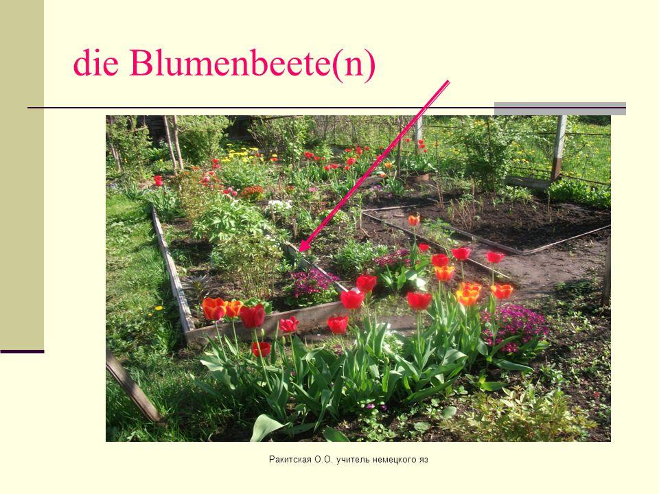 die Blumenbeete(n) Ракитская О.О. учитель немецкого яз