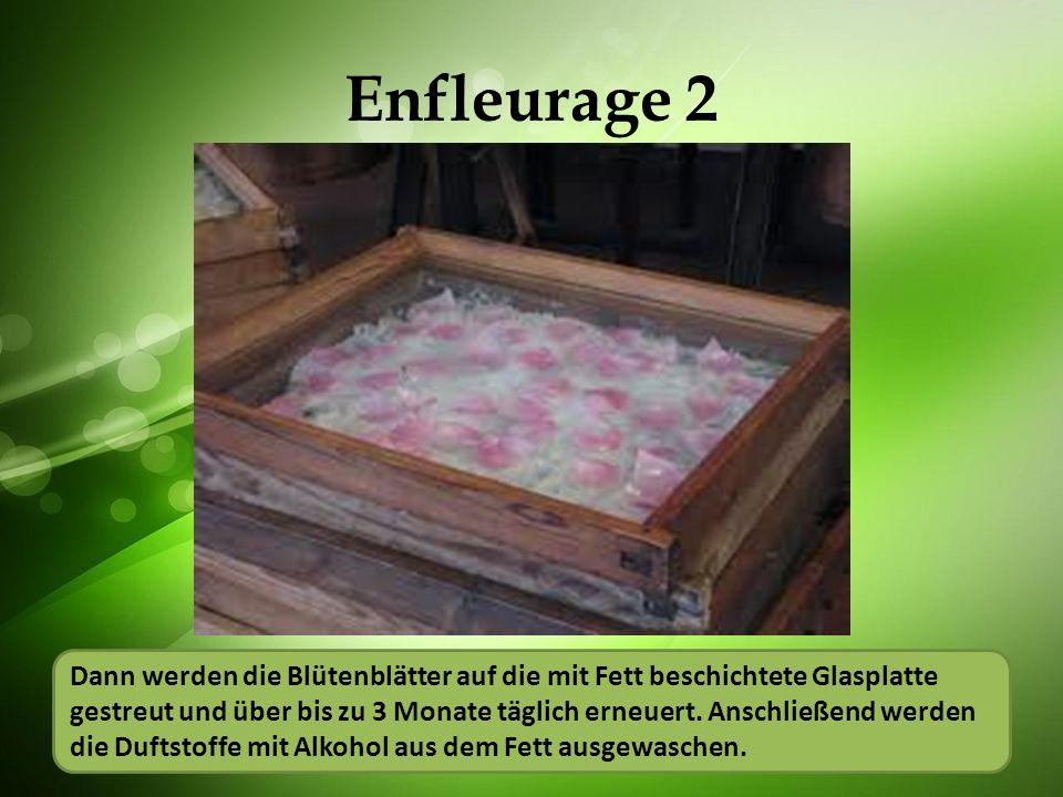 Enfleurage 2 Blütenblätter werden auf eine mit Fett beschichtete Glasplatte gestreut und über bis zu 3 Monate täglich erneuert. Anschließend werden du