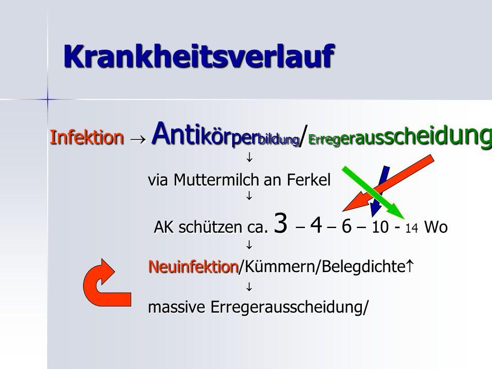 Krankheitsverlauf Infektion A nti kör per bild ung / Er reg er a us sch eid ung via Muttermilch an Ferkel AK schützen ca.
