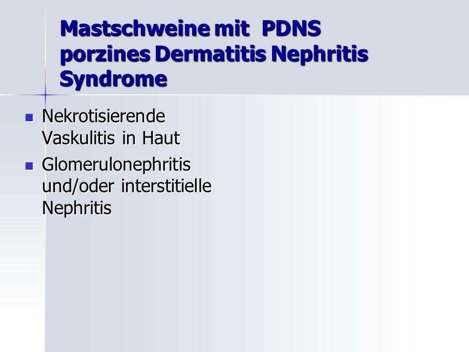 Mastschweine mit PDNS porzines Dermatitis Nephritis Syndrome Nekrotisierende Vaskulitis in Haut Nekrotisierende Vaskulitis in Haut Glomerulonephritis und/oder interstitielle Nephritis Glomerulonephritis und/oder interstitielle Nephritis