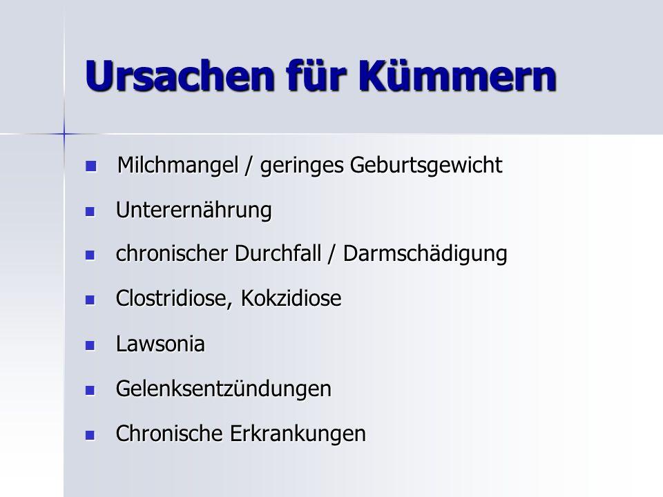 Ursachen für Kümmern Milchmangel / geringes Geburtsgewicht Milchmangel / geringes Geburtsgewicht Unterernährung Unterernährung chronischer Durchfall / Darmschädigung chronischer Durchfall / Darmschädigung Clostridiose, Kokzidiose Clostridiose, Kokzidiose Lawsonia Lawsonia Gelenksentzündungen Gelenksentzündungen Chronische Erkrankungen Chronische Erkrankungen