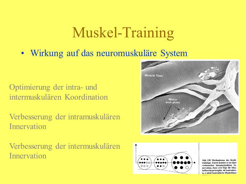 Muskel-Training Wirkung auf das neuromuskuläre System Optimierung der intra- und intermuskulären Koordination Verbesserung der intramuskulären Innerva
