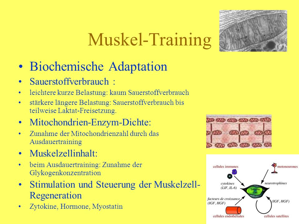 Muskel-Training Biochemische Adaptation Sauerstoffverbrauch : leichtere kurze Belastung: kaum Sauerstoffverbrauch stärkere längere Belastung: Sauersto