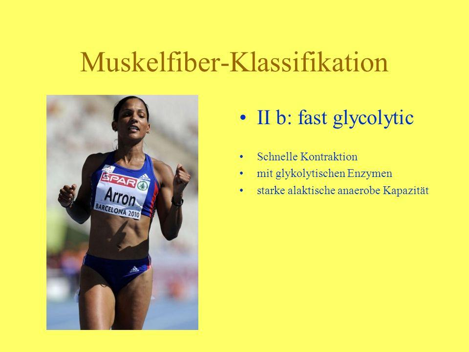 Muskelfiber-Klassifikation I: slow oxydative langsame Kontraktion mitochondrienreich und mit dichterem Kapillarnetz starke Ausdauerfähigkeit
