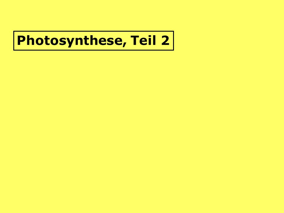 Für diejenigen, die es genauer wissen möchten (also, für alle): 1.)Umwandlung von Lichtenergie in chemische Energie: durch Licht angeregte Elektronen des Chlorophyllmoleküls hängen an ADP- Moleküle einen zusätzlichen Phosphorsäurerest und es entsteht : energiereiches ATP (=AdenosinTriPhosphat) = Zyklische Photophosphorylierung