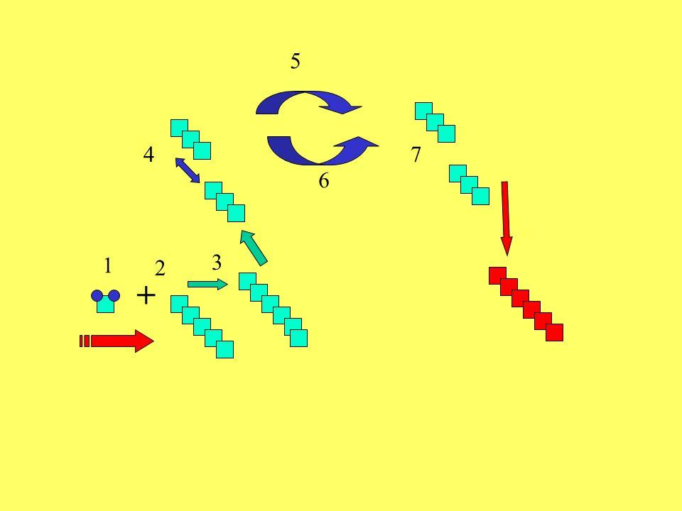 ATP ADP C3 C6 C3 NADPH +H NADP H2O H2O C5 = AKZEPTOR ZWISCHEN- PRODUKTE ATP C 6 H 12 O 6 Traubenzucker ADP CO 2 C3+C3