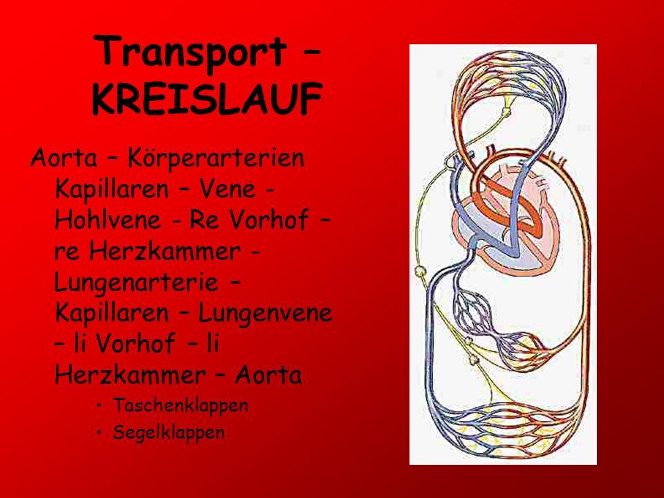 Transport – KREISLAUF Aorta – Körperarterien Kapillaren – Vene - Hohlvene - Re Vorhof – re Herzkammer - Lungenarterie – Kapillaren – Lungenvene – li V
