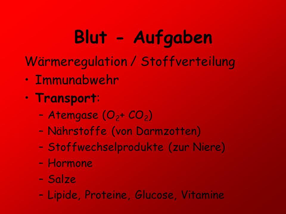 Blut - Aufgaben Wärmeregulation / Stoffverteilung Immunabwehr Transport: –Atemgase (O 2 + CO 2 ) –Nährstoffe (von Darmzotten) –Stoffwechselprodukte (z