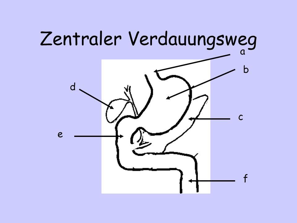Zentraler Verdauungsweg a b d c f e