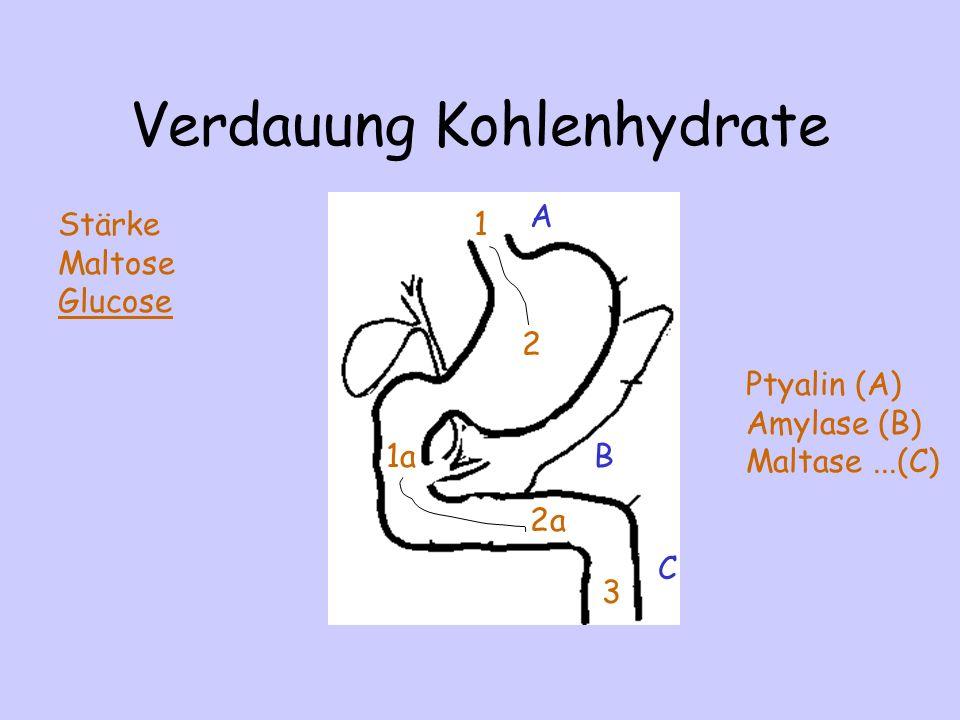 Verdauung Kohlenhydrate A Ptyalin (A) Amylase (B) Maltase...(C) B C 1 2 1a 2a 3 Stärke Maltose Glucose