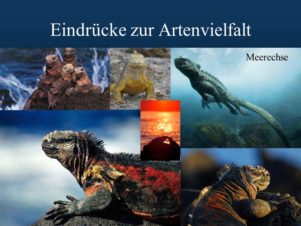 Eindrücke zur Artenvielfalt Meerechse