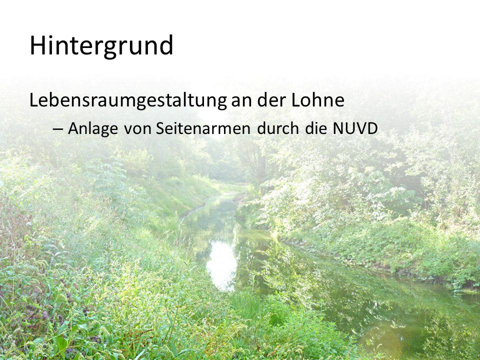 Hintergrund Lebensraumgestaltung an der Lohne – Anlage von Seitenarmen durch die NUVD
