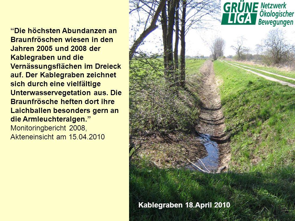 Kablegraben 18.April 2010 Die höchsten Abundanzen an Braunfröschen wiesen in den Jahren 2005 und 2008 der Kablegraben und die Vernässungsflächen im Dr