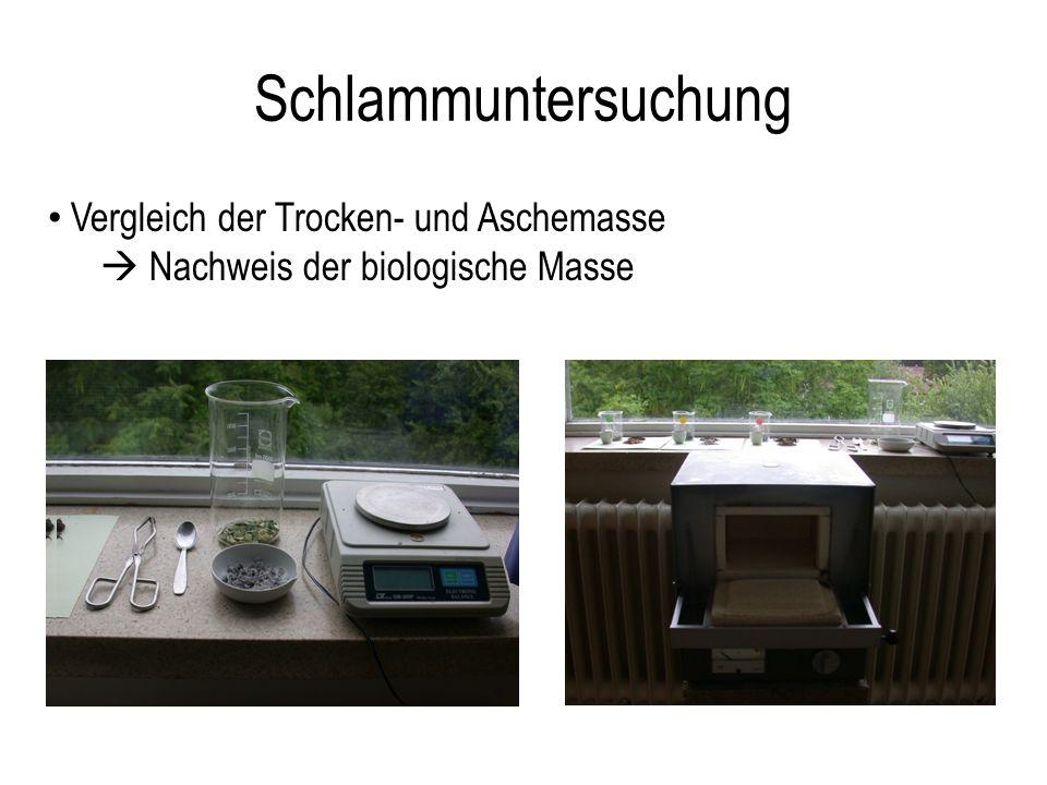 Schlammuntersuchung Vergleich der Trocken- und Aschemasse Nachweis der biologische Masse