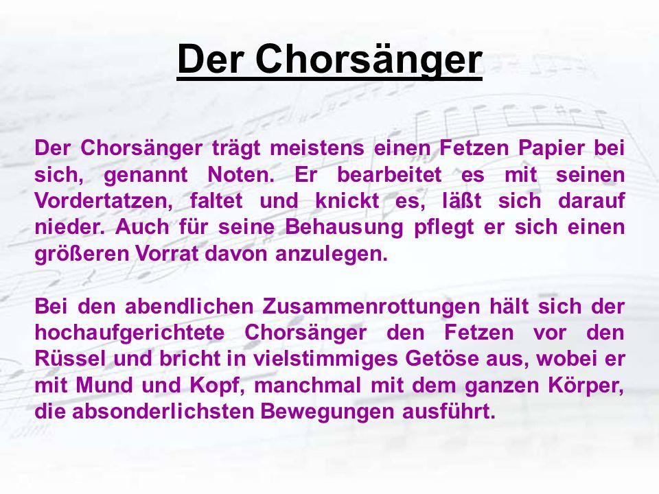 Der Chorsänger Der Chorsänger trägt meistens einen Fetzen Papier bei sich, genannt Noten. Er bearbeitet es mit seinen Vordertatzen, faltet und knickt