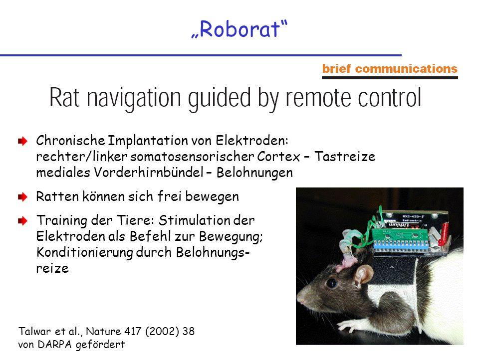 Roborat Chronische Implantation von Elektroden: rechter/linker somatosensorischer Cortex – Tastreize mediales Vorderhirnbündel – Belohnungen Ratten kö