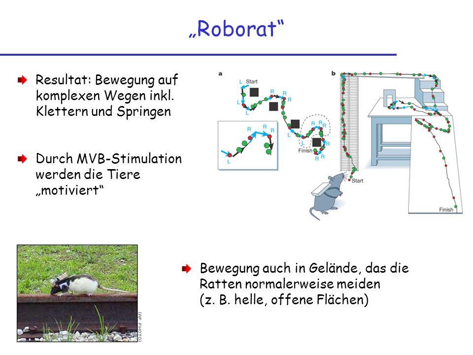 Roborat Resultat: Bewegung auf komplexen Wegen inkl. Klettern und Springen Durch MVB-Stimulation werden die Tiere motiviert Bewegung auch in Gelände,
