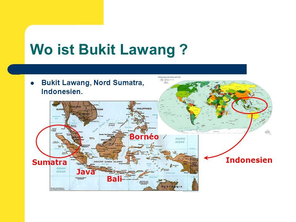 Wo ist Bukit Lawang Bukit Lawang, Nord Sumatra, Indonesien. Indonesien Sumatra Java Bali Bornéo