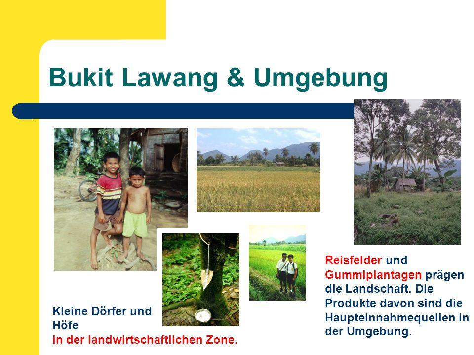 Bukit Lawang & Umgebung Kleine Dörfer und Höfe in der landwirtschaftlichen Zone.
