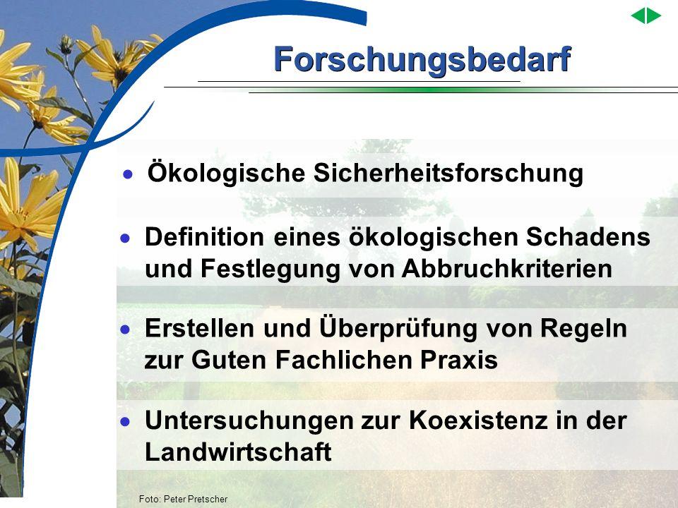 Forschungsbedarf Foto: Peter Pretscher Ökologische Sicherheitsforschung Untersuchungen zur Koexistenz in der Landwirtschaft Erstellen und Überprüfung