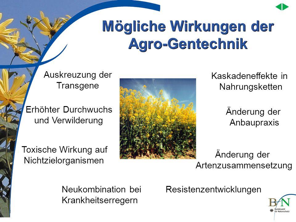 Mögliche Wirkungen der Agro-Gentechnik Kaskadeneffekte in Nahrungsketten Änderung der Anbaupraxis Änderung der Artenzusammensetzung Resistenzentwicklu