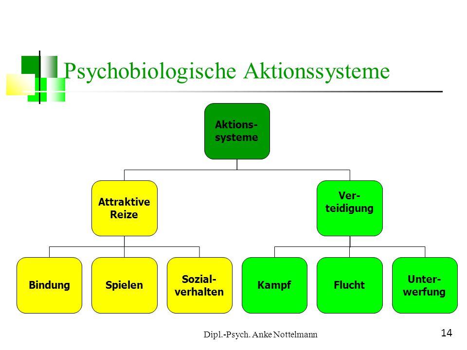 Dipl.-Psych. Anke Nottelmann 14 Psychobiologische Aktionssysteme Aktions- systeme Attraktive Reize Ver- teidigung KampfFlucht Unter- werfung BindungSp