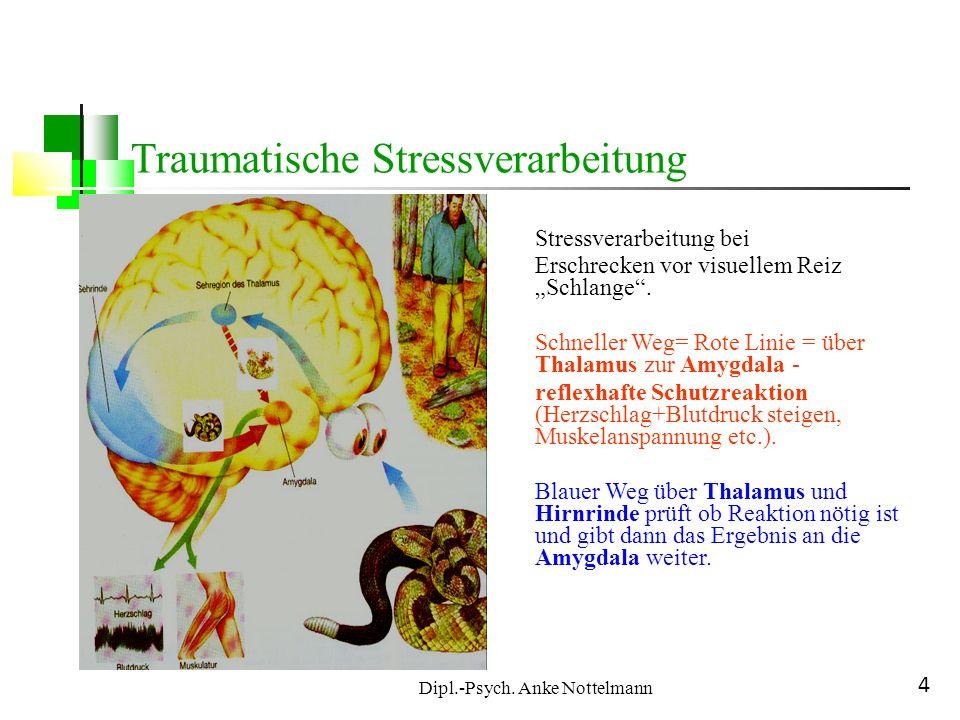 Dipl.-Psych. Anke Nottelmann 4 Traumatische Stressverarbeitung Stressverarbeitung bei Erschrecken vor visuellem Reiz Schlange. Schneller Weg= Rote Lin