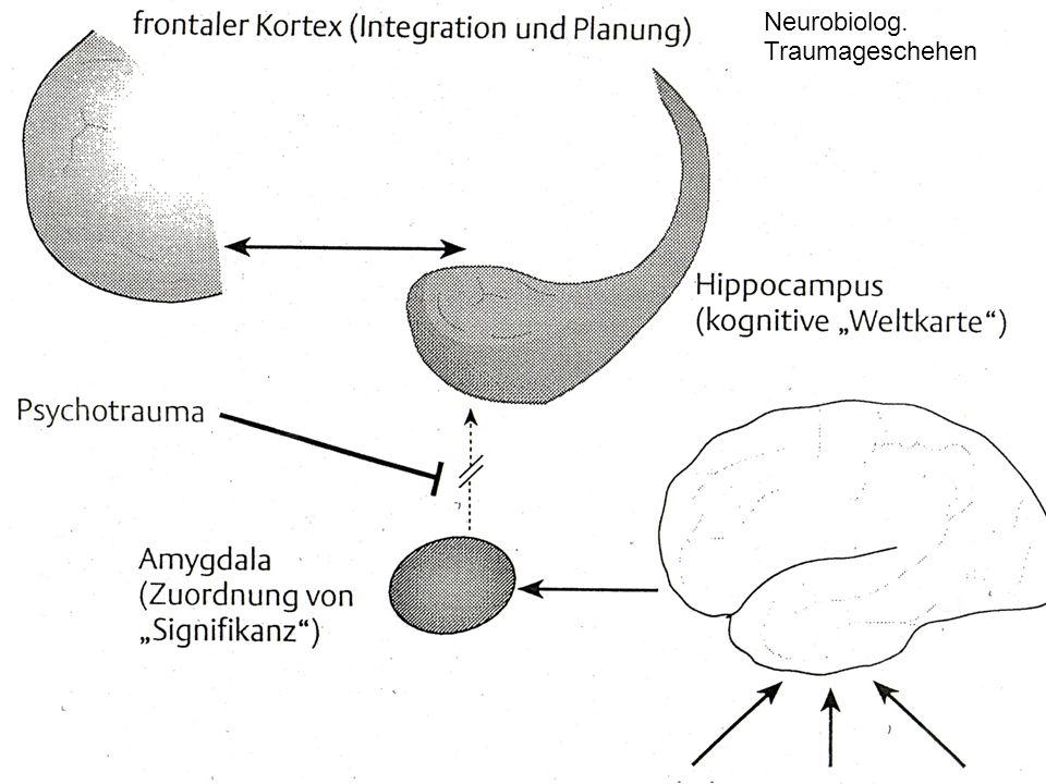Dipl.-Psych. Anke Nottelmann 5 Neurobiolog. Traumageschehen