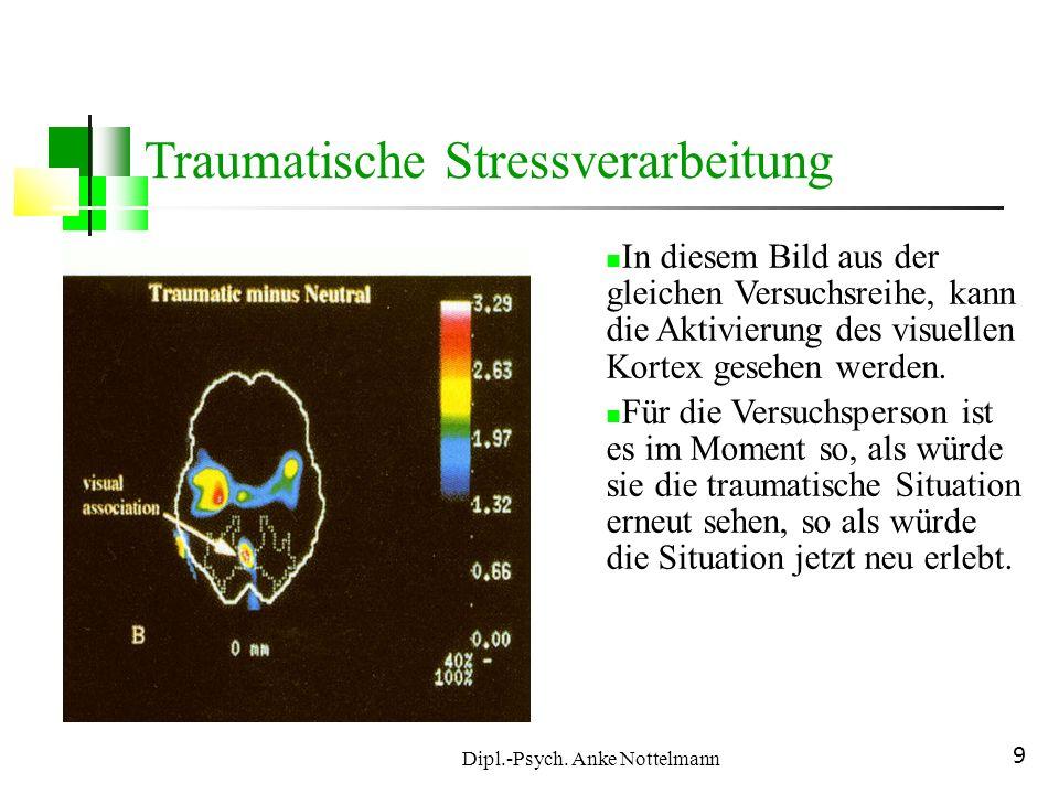Dipl.-Psych. Anke Nottelmann 9 In diesem Bild aus der gleichen Versuchsreihe, kann die Aktivierung des visuellen Kortex gesehen werden. Für die Versuc