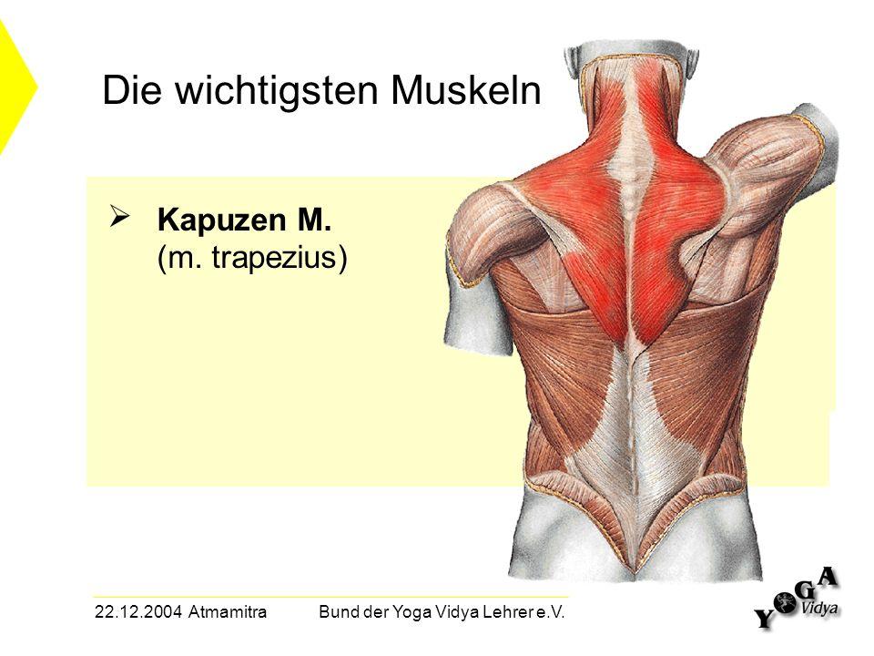 22.12.2004 Atmamitra Bund der Yoga Vidya Lehrer e.V. Die wichtigsten Muskeln Kapuzen M. (m. trapezius)
