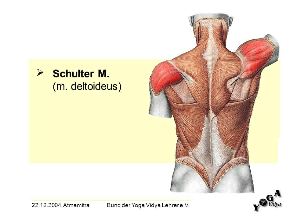 22.12.2004 Atmamitra Bund der Yoga Vidya Lehrer e.V. Schulter M. (m. deltoideus)