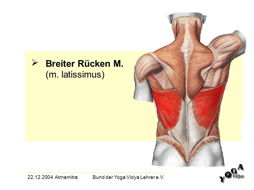 22.12.2004 Atmamitra Bund der Yoga Vidya Lehrer e.V. Breiter Rücken M. (m. latissimus)