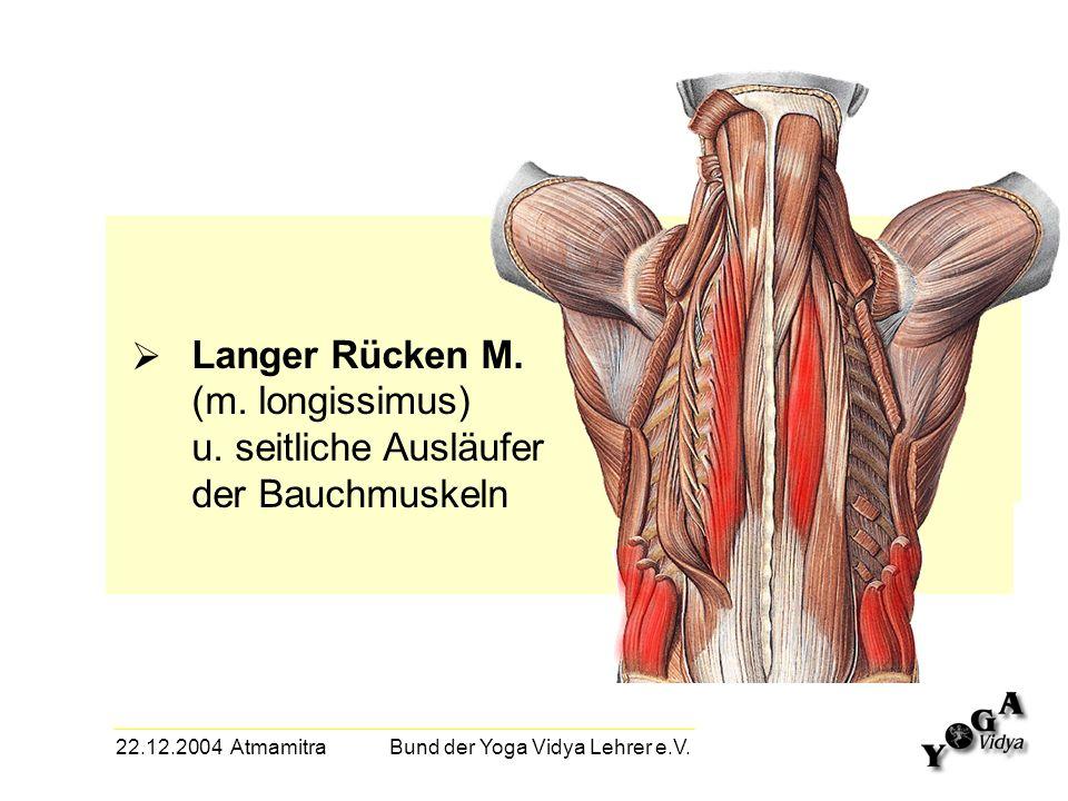 22.12.2004 Atmamitra Bund der Yoga Vidya Lehrer e.V. Langer Rücken M. (m. longissimus) u. seitliche Ausläufer der Bauchmuskeln
